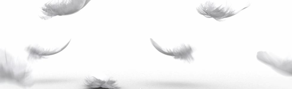 feathersvideoscreenshot