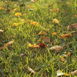Podzimní tráva