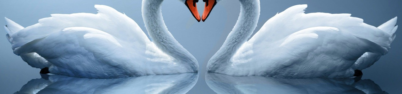 swan-love-heart-wallpaper