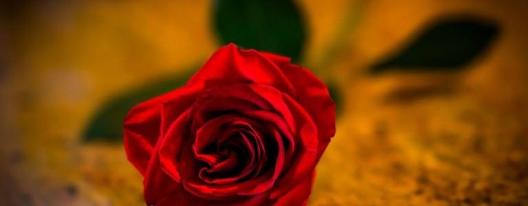 beautiful-rose-wallpaper-768x480